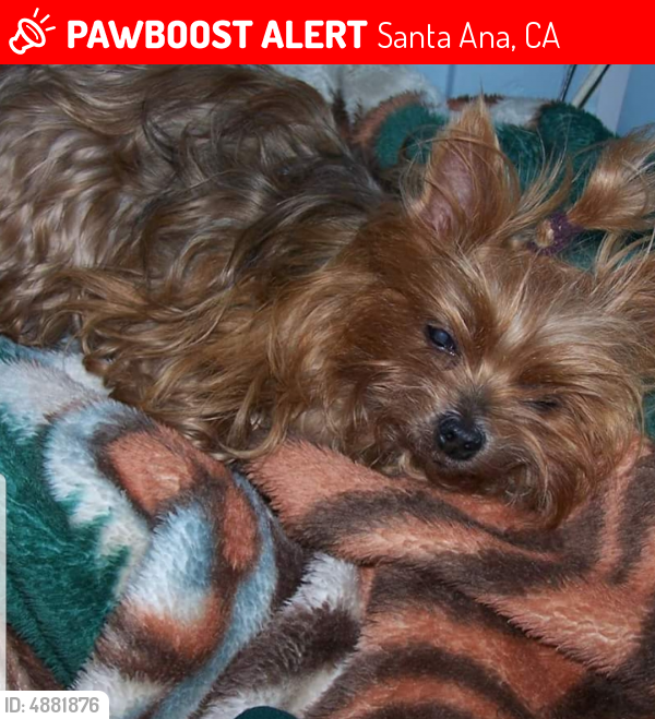 Lost Female Dog last seen Near N Williams St & Barclay Ct, Santa Ana, CA 92701