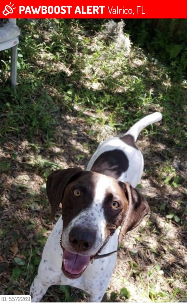 Deceased Male Dog last seen Near Old Mulrennan Rd & Carousel Ln, Valrico, FL 33594