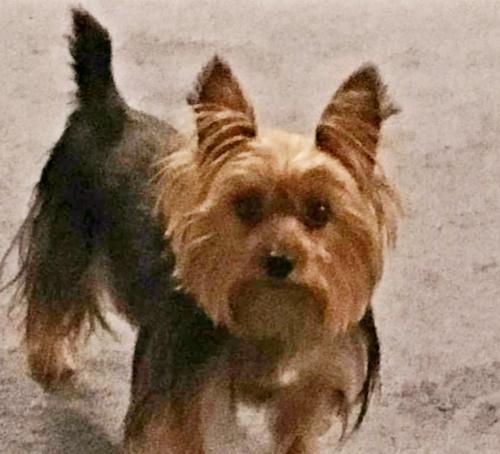 Lost Male Dog last seen MLK Ave., Benning Rd, Stanton Rd., Washington, DC 20020