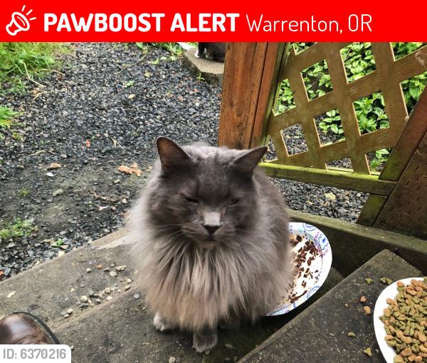 Lost Male Cat last seen Sunset Beach lane/Lexington, Warrenton, OR 97146