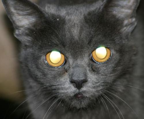 Lost Female Cat last seen Shea Blvd. and Scottsdale Rd., Scottsdale, AZ 85254