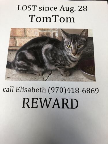 Lost Male Cat last seen Southwood and Briaroak a block from Lowe's & Robley, Lafayette, LA 70503