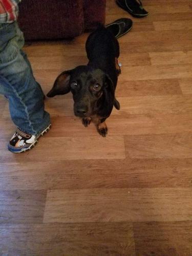 Lost Female Dog last seen Edmund Hwy, Pelion, SC 29123