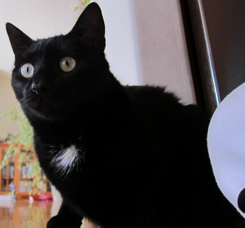 Lost Male Cat last seen Seacliff Drive and Middlefield Drive, Aptos, CA 95003