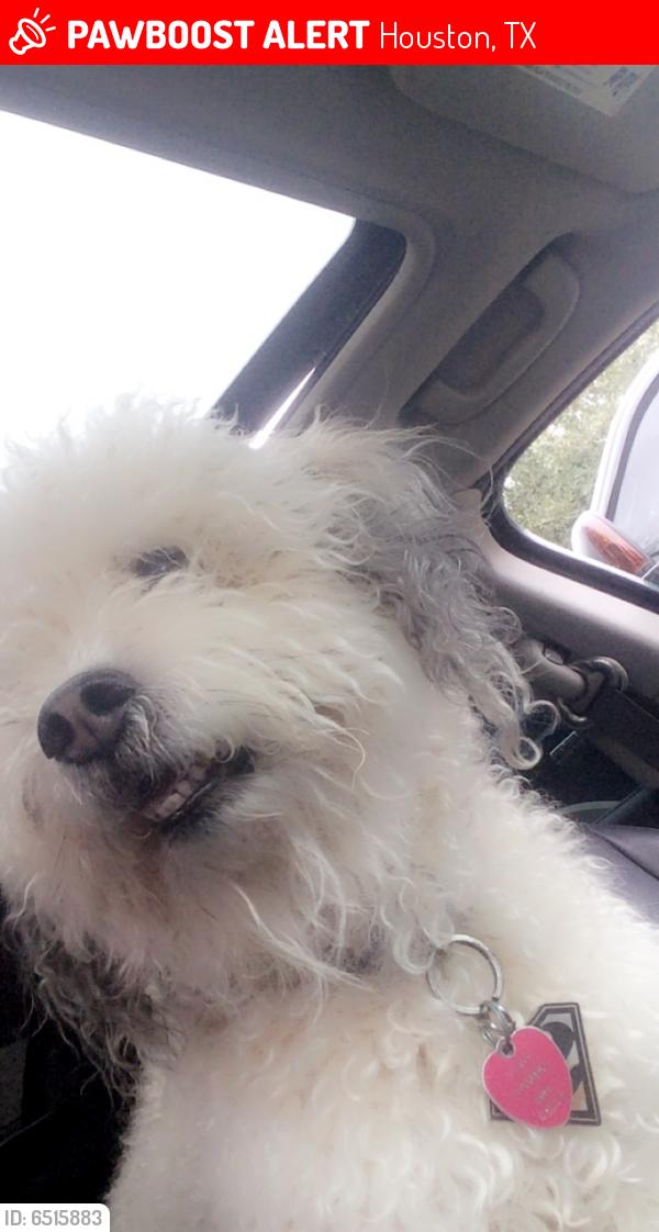 Lost Male Dog last seen West oaks mall area, Houston, TX 77082