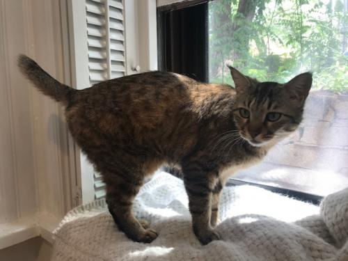 Lost Female Cat last seen 16th and S Street NW Washington DC, Washington, DC 20009