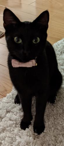 Lost Female Cat last seen Near Evelyn ave Sunnyvale, Sunnyvale, CA 94086
