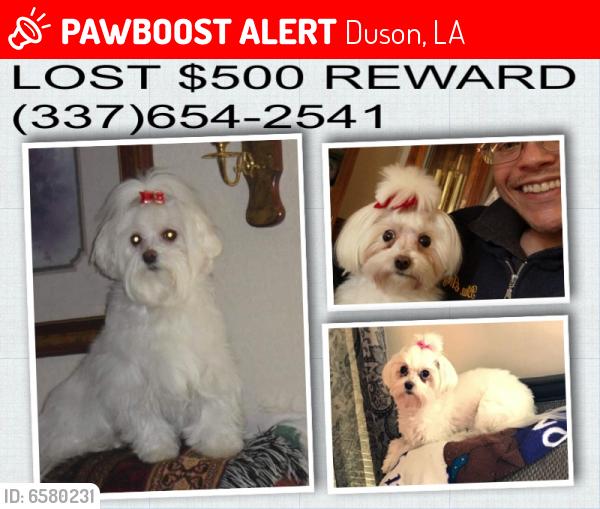 Lost Female Dog last seen Althea Drive (cul-de-sac), intersects South Fieldspan (LA 724), Duson, LA 70529