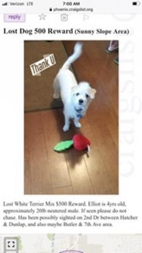 Lost Male Dog last seen By Sunnyslope High, Phoenix, AZ 85021