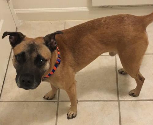 Lost Male Dog last seen Hyatt Hotel on Main Street, Sumter, SC 29151