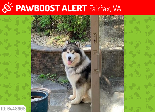 Lost Male Dog last seen Prosperity Avenue and Little River Tnpk, Fairfax, VA 22031