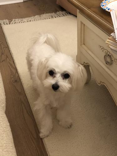 Lost Female Dog last seen Near Woodcreek Country Club, Elgin, SC 29045