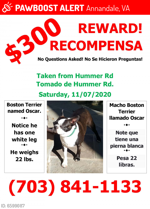 Lost Male Dog last seen Hummer Rd & Gallows Rd, Annandale, VA 22003