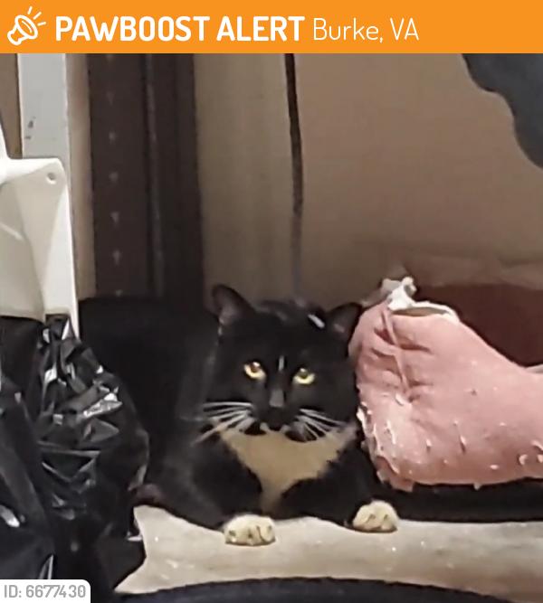 Found/Stray Male Cat last seen Burke Nursery and Garden Centre 9401 Burke Rd Burke, VA 22015, Burke, VA 22015
