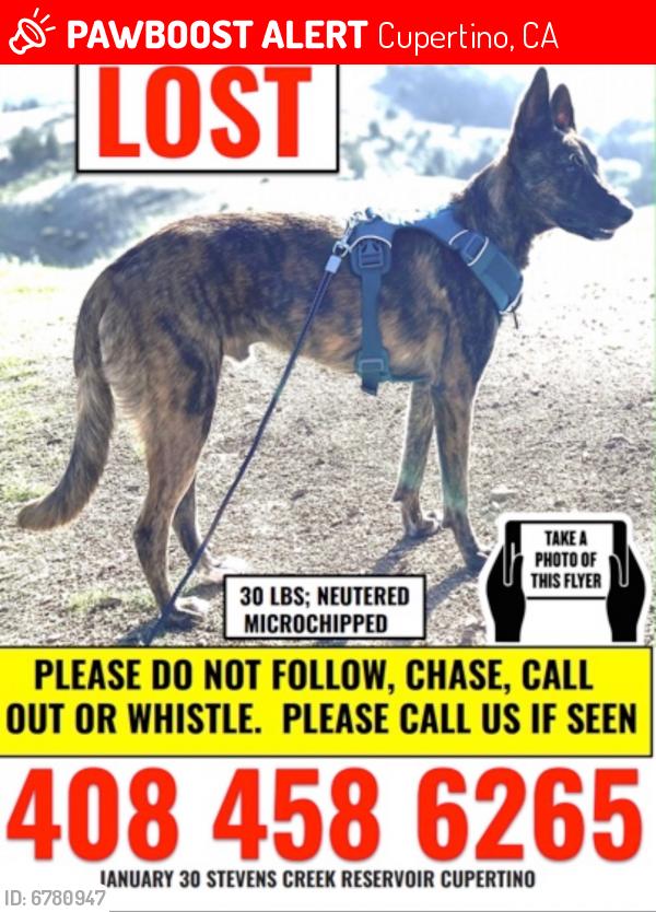 Lost Male Dog last seen Stevens creek reservoir , Cupertino, CA 95014
