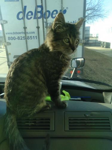 Lost Male Cat last seen Near 111th St, Grand Prairie, TX 75050, Grand Prairie, TX 75050