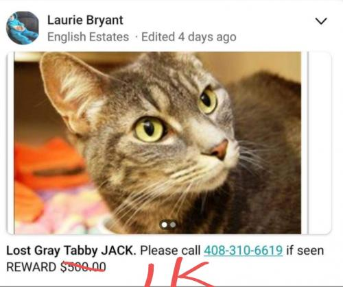 Lost Male Cat last seen Prospect Rd/ Lyle Dr, San Jose, CA 95129