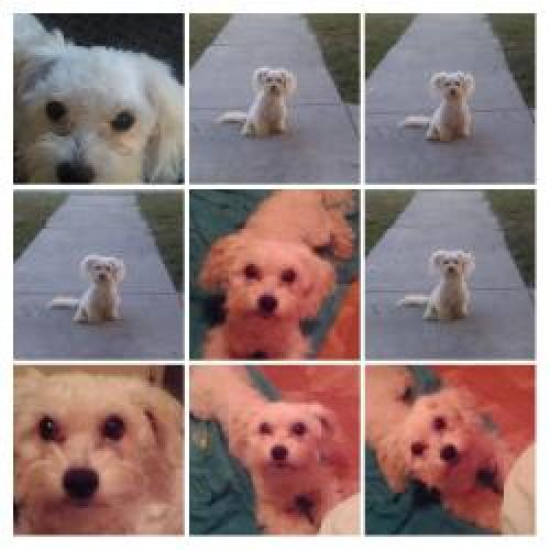 Lost Male Dog last seen 2nd and Harbor, San Pedro CA, Los Angeles, CA 90731
