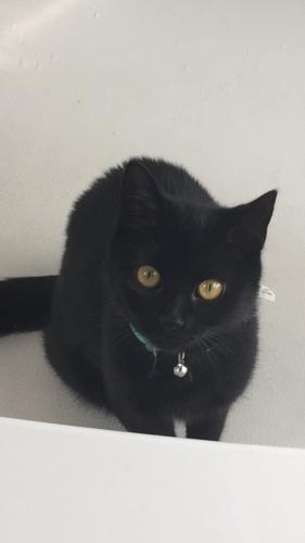 Lost Female Cat last seen High Street between Taylor and Beresford, DeLand, FL 32720