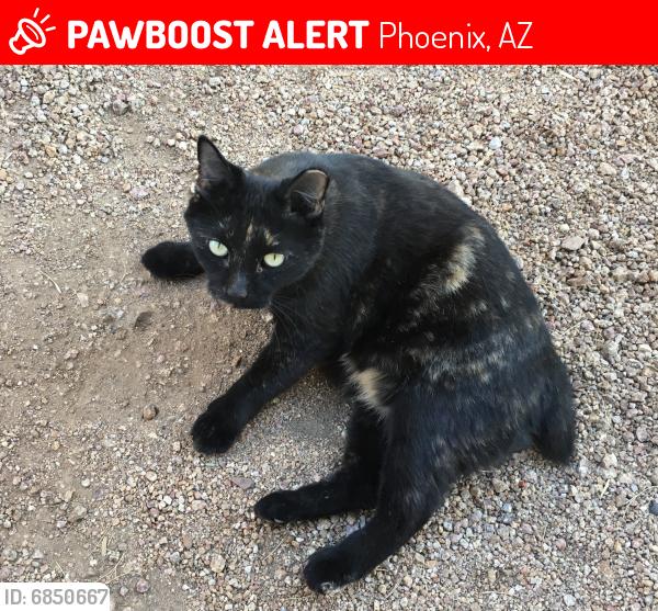 Lost Female Cat last seen S 23rd Ave & W Baseline Rd, Phoenix, Phoenix, AZ 85041