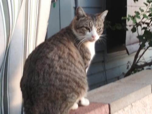 Lost Male Cat last seen Helens Hope Chest, Mesa, AZ 85201