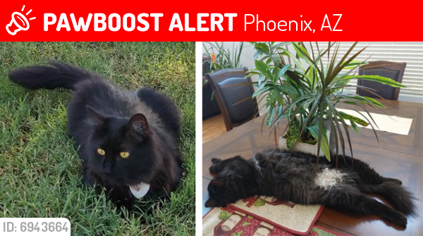 Lost Female Cat last seen Dobbin Points, Laveen, AZ, Phoenix, AZ 85339
