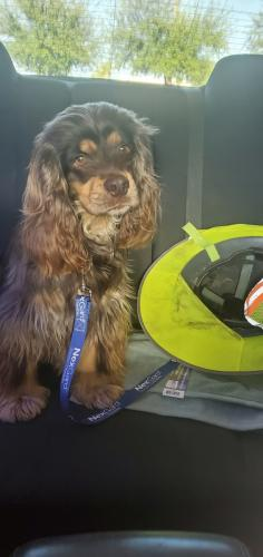 Lost Male Dog last seen 8th Ave & Stapley , Mesa, AZ 85204