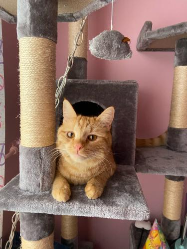 Lost Male Cat last seen Melmark and Hartley Pl., Gaithersburg, MD 20878