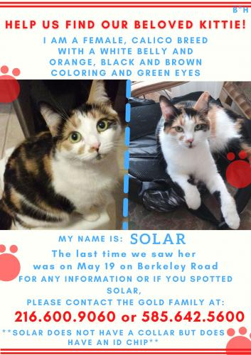 Lost Female Cat last seen Berkeley/Staunton, Berkeley/Maple, Cleveland Heights, OH 44118