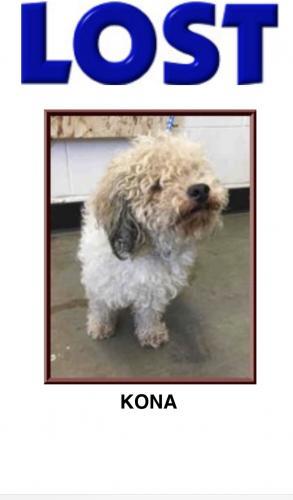Lost Male Dog last seen Ridgeview Way & Ridgeview Court , San Jose, CA 95127