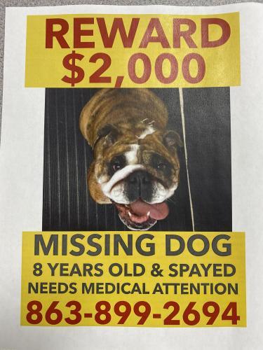 Lost Female Dog last seen NE Colin Kelly Hwy next to Locust Grove, Madison, FL 32340