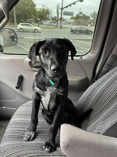 Lost Male Dog last seen Miltons Country Store , Columbia County, FL 32055