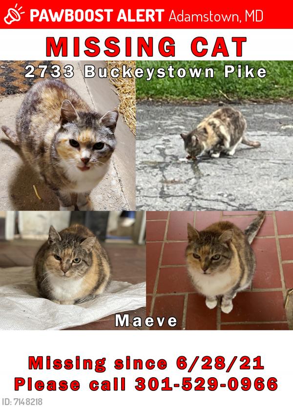 Lost Female Cat last seen Near & Adamstown Rd, Adamstown, MD 21710