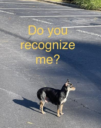 Found/Stray Female Dog last seen Emory woods apmts Durham Nc, Durham, NC 27713