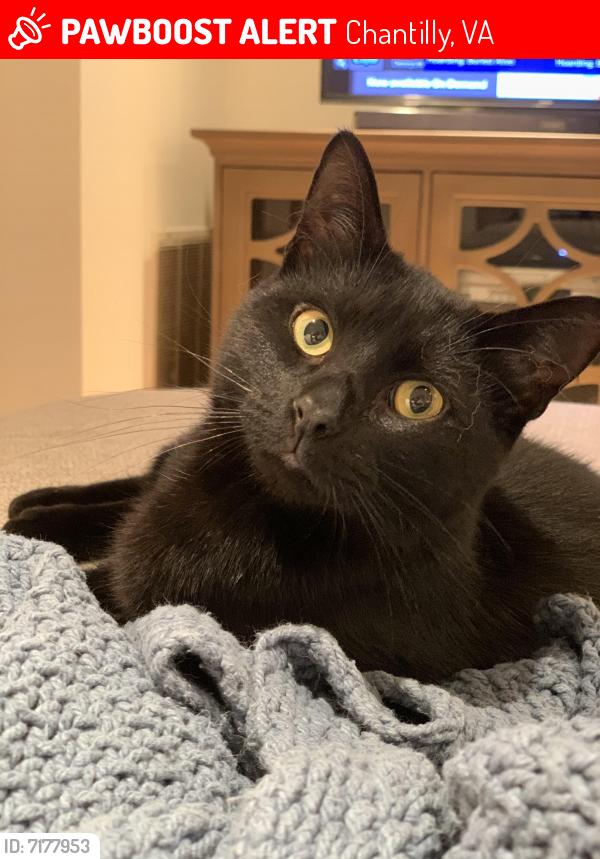 Lost Male Cat last seen Neighborhood near fair oaks hospital , Chantilly, VA 22033