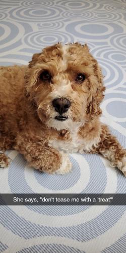 Lost Female Dog last seen Berry rd & Livingston rd, Accokeek, MD 20607