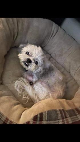 Lost Male Dog last seen Near eau Claire ave Deland , DeLand, FL 32724