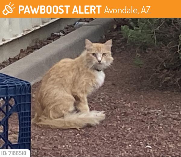 Found/Stray Unknown Cat last seen Estrella Nursing and Rehab, Avondale, AZ 85323