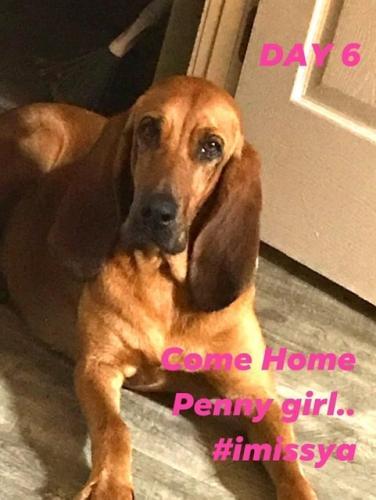 Lost Female Dog last seen Near hwy , Jennings, FL 32053