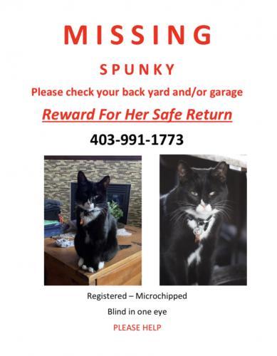 Lost Female Cat last seen Autumn Green , Calgary, AB T3M 0H4