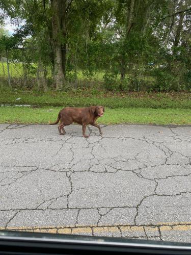 Found/Stray Male Dog last seen Lake City Mall area, Lake City, FL 32055