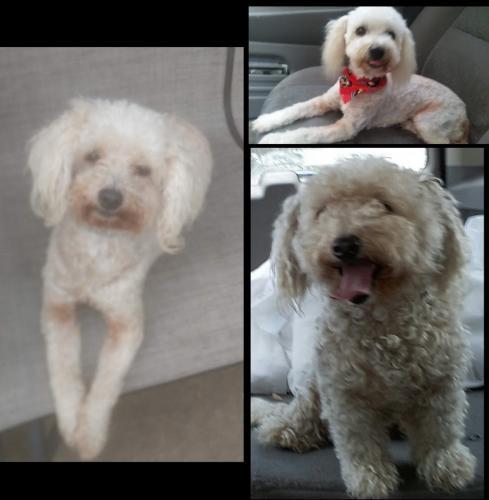 Lost Female Dog last seen Jorine and Sandstone, Houston, TX 77036