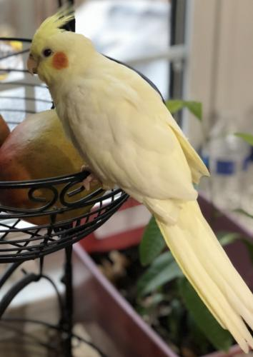 Lost Unknown Bird last seen Alban and Pohick road intersection , Springfield, VA 22153