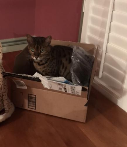 Lost Female Cat last seen Between INOVA Fairfax Hospital and Annandale NOVA , Annandale, VA 22003