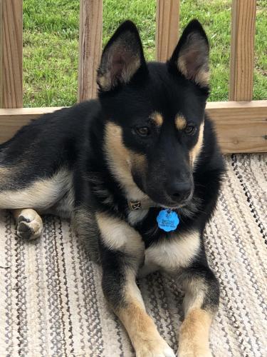 Lost Male Dog last seen Beavercreek ests, Caldwell, TX 77836