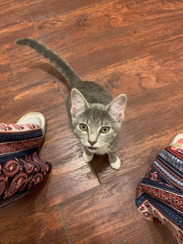 Found/Stray Female Cat last seen Wellborn, FL, USA, Wellborn, FL