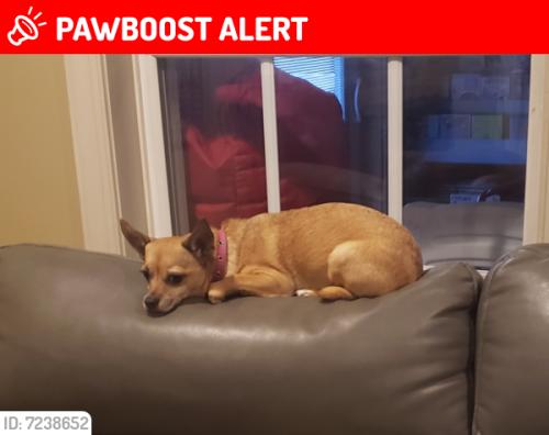 Lost Female Dog last seen Near Marketree Court, Jefferson, MD 21755