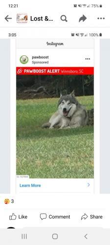 Lost Male Dog last seen Near Kincaid Bridge Road, Winnsboro, SC, USA, Winnsboro, SC 29180