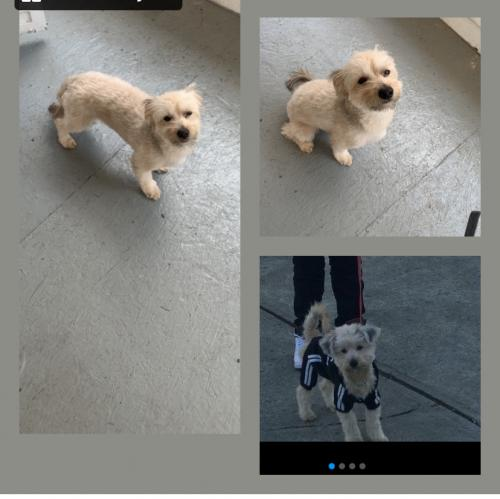 Lost Male Dog last seen Scranton rd , Cleveland, OH 44113