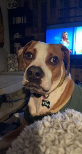 Lost Male Dog last seen Broadway and 32nd street , Phoenix, AZ 85040